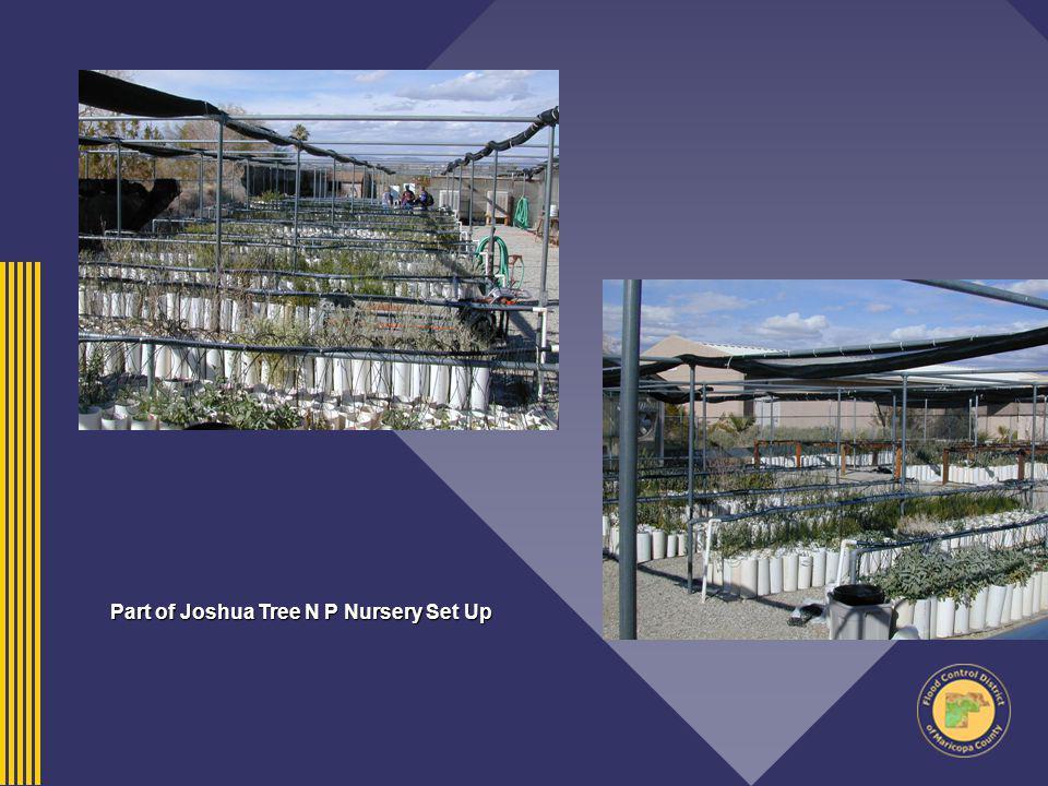 Part of Joshua Tree N P Nursery Set Up
