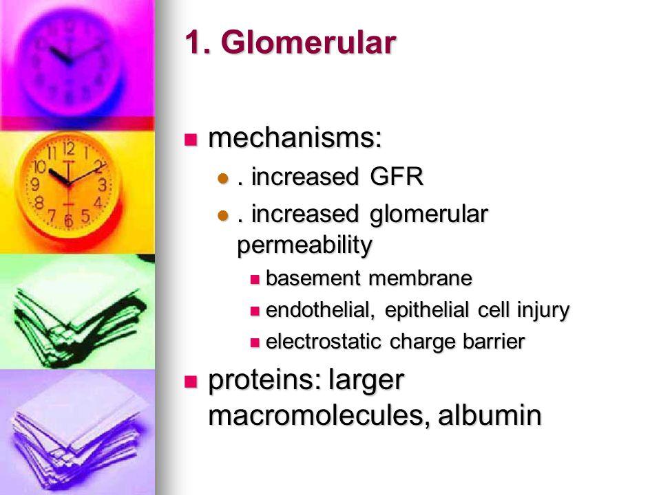 1. Glomerular mechanisms: mechanisms:. increased GFR. increased GFR. increased glomerular permeability. increased glomerular permeability basement mem