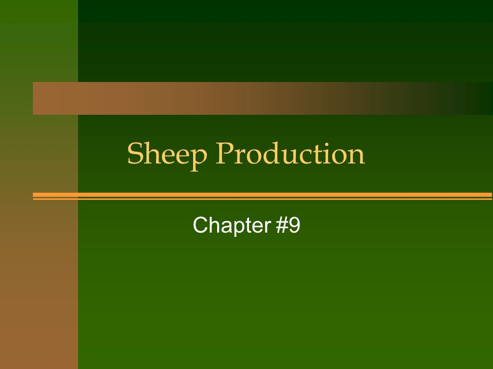 Sheep Production Chapter #9