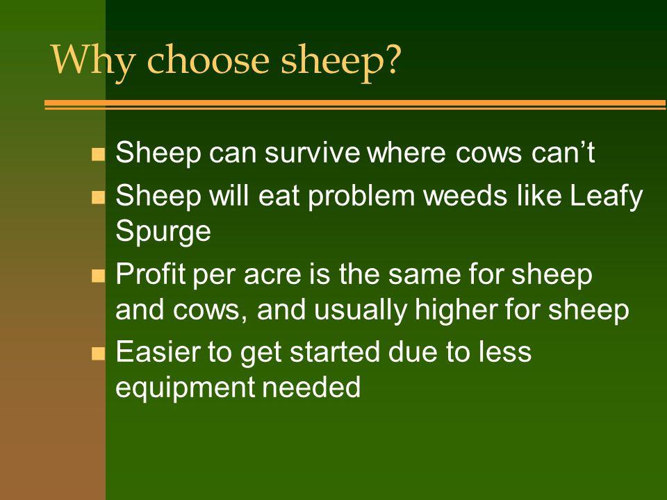 Breed Categories n Wool Type: white wool only, better quality n Meat Type: any black wool n Dual Purpose: white wool, but better meat than wool types