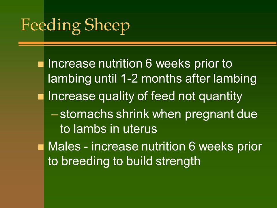 Sheep Reproduction n Seasonal breeders - only breed in spring and fall n Ewe lambs must be 100 lbs.....