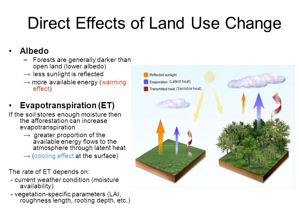 Albedo –Forests are generally darker than open land (lower albedo) less sunlight is reflected more available energy (warming effect) Evapotranspiratio