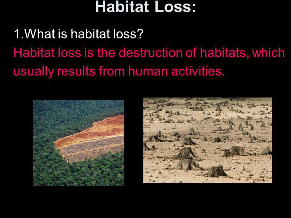 Habitat Loss: 1.What is habitat loss? Habitat loss is the destruction of habitats, which usually results from human activities.