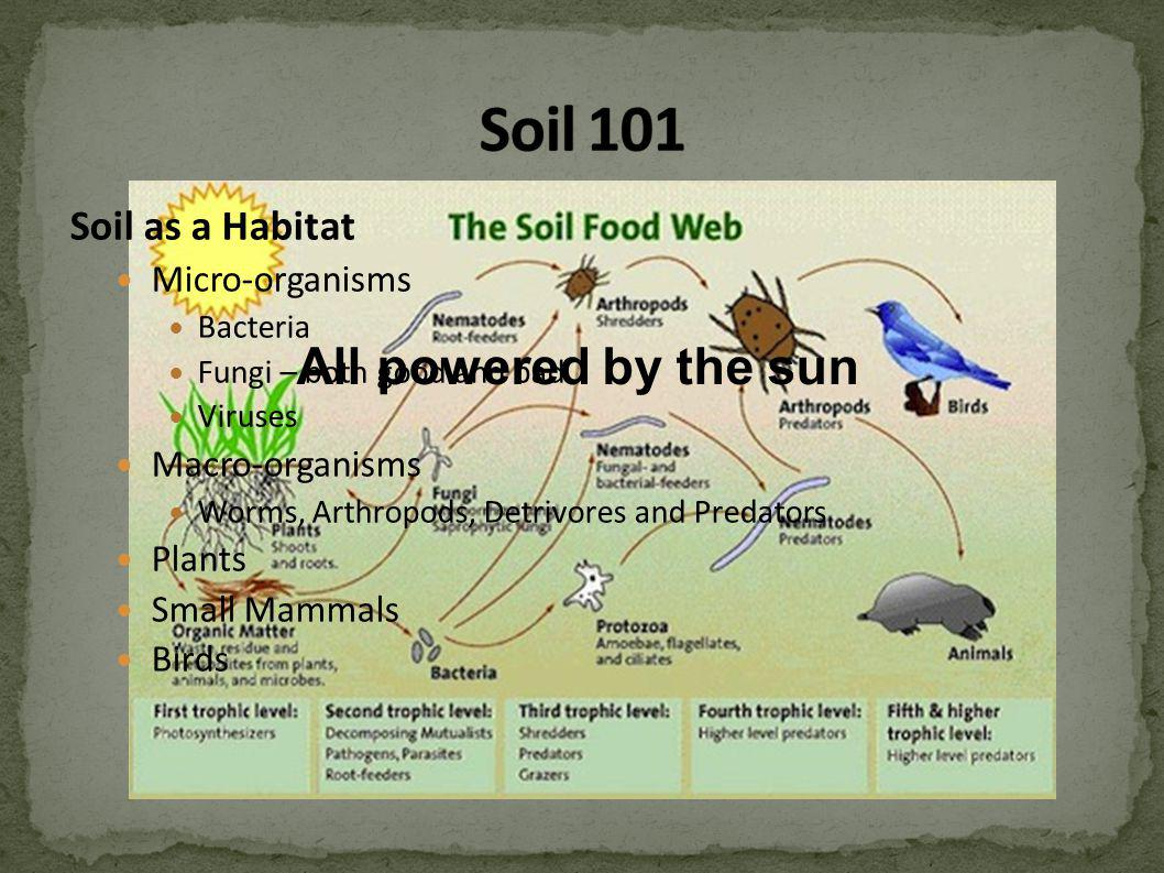 Soil as a Habitat Micro-organisms Bacteria Fungi – both good and bad Viruses Macro-organisms Worms, Arthropods, Detrivores and Predators Plants Small Mammals Birds All powered by the sun