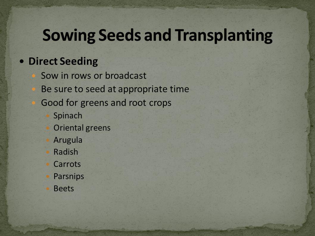 Direct Seeding Sow in rows or broadcast Be sure to seed at appropriate time Good for greens and root crops Spinach Oriental greens Arugula Radish Carrots Parsnips Beets