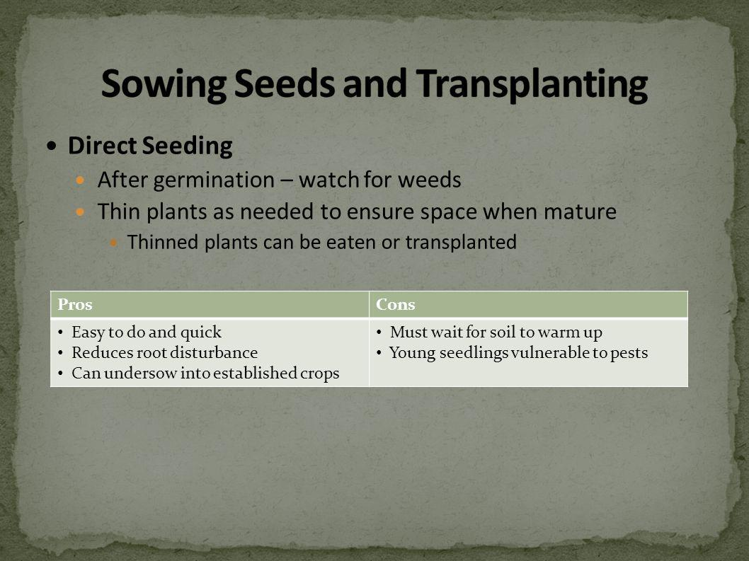 Direct Seeding After germination – watch for weeds Thin plants as needed to ensure space when mature Thinned plants can be eaten or transplanted ProsCons Easy to do and quick Reduces root disturbance Can undersow into established crops Must wait for soil to warm up Young seedlings vulnerable to pests