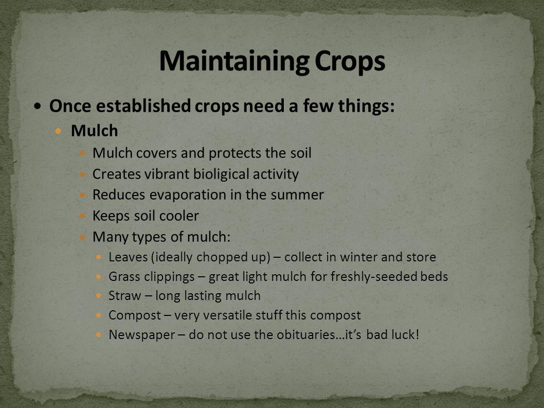 Once established crops need a few things: Mulch Mulch covers and protects the soil Creates vibrant bioligical activity Reduces evaporation in the summ