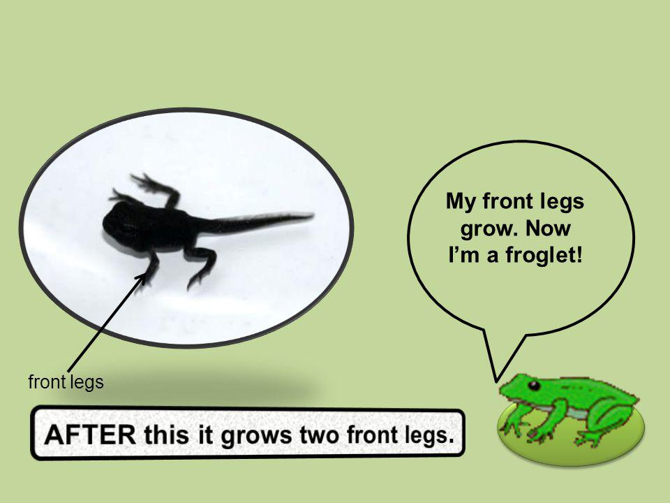 My front legs grow. Now Im a froglet! front legs