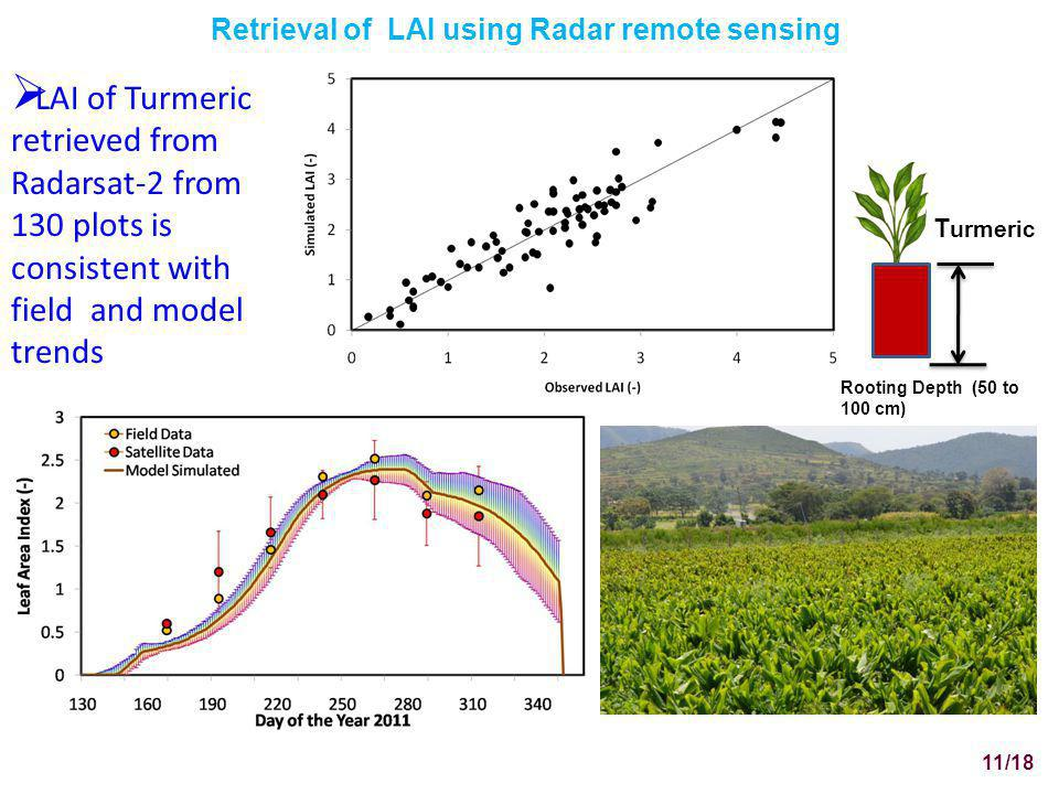 Retrieval of LAI using Radar remote sensing LAI of Turmeric retrieved from Radarsat-2 from 130 plots is consistent with field and model trends 11/18 Rooting Depth (50 to 100 cm) T urmeric