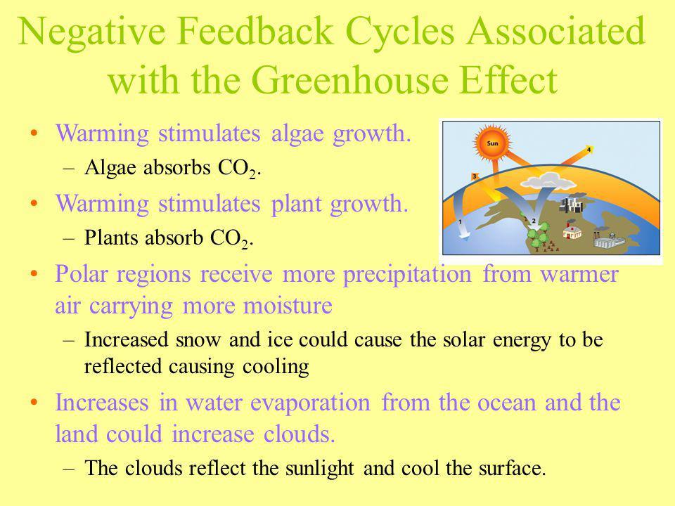 Warming stimulates algae growth. –Algae absorbs CO 2. Warming stimulates plant growth. –Plants absorb CO 2. Polar regions receive more precipitation f