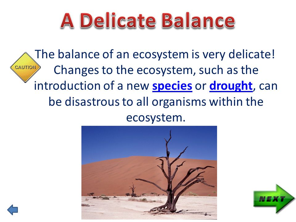 The balance of an ecosystem is very delicate.