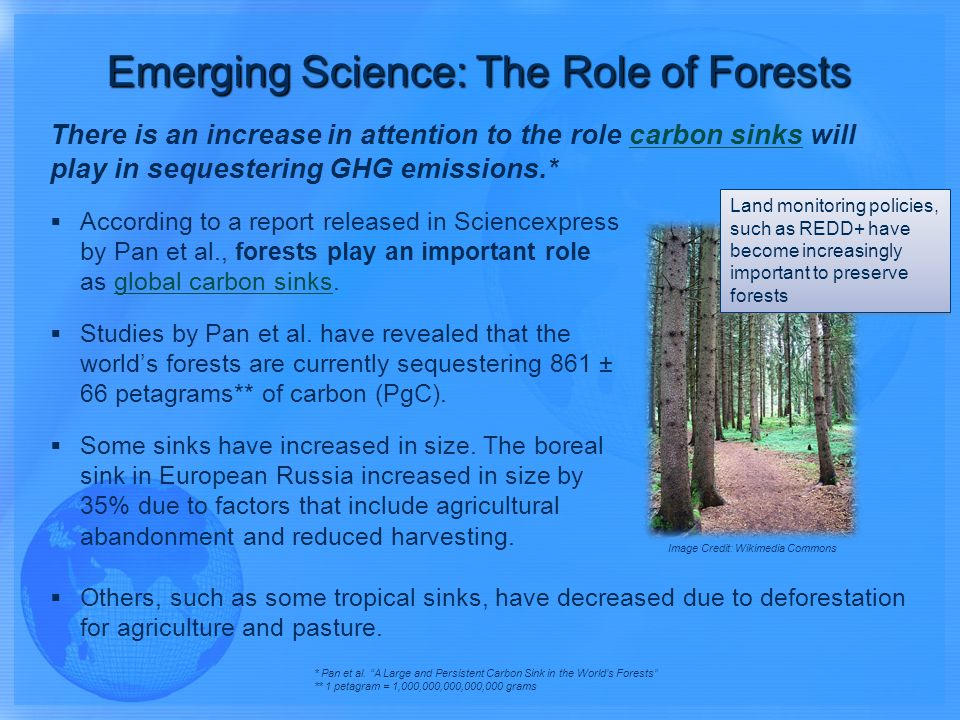 There is an increase in attention to the role carbon sinks will play in sequestering GHG emissions.*carbon sinks According to a report released in Sciencexpress by Pan et al., forests play an important role as global carbon sinks.global carbon sinks * Pan et al.