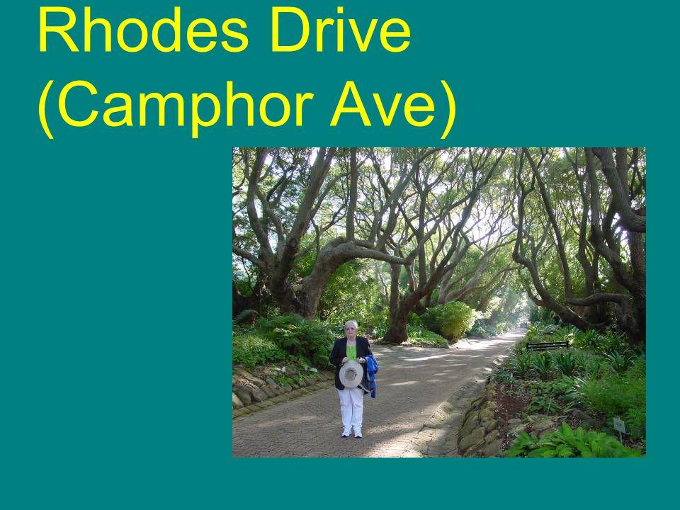 Rhodes Drive (Camphor Ave)