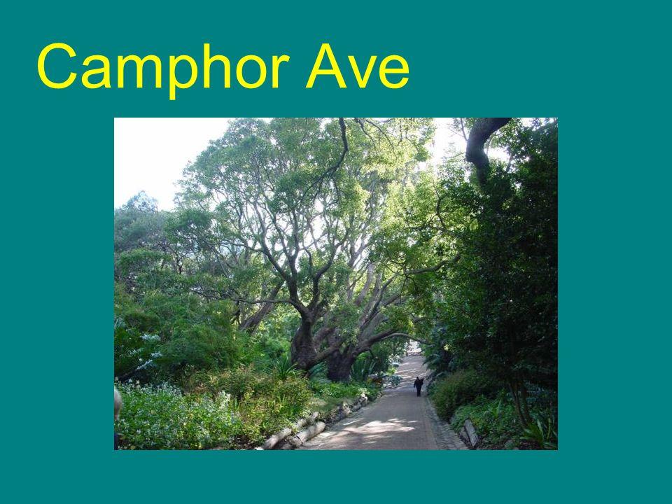 Camphor Ave