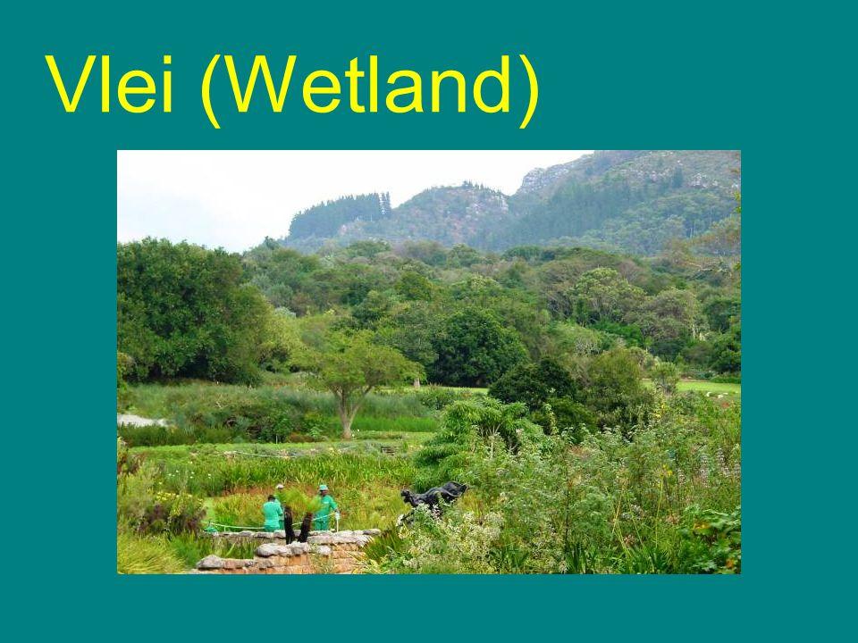 Vlei (Wetland)
