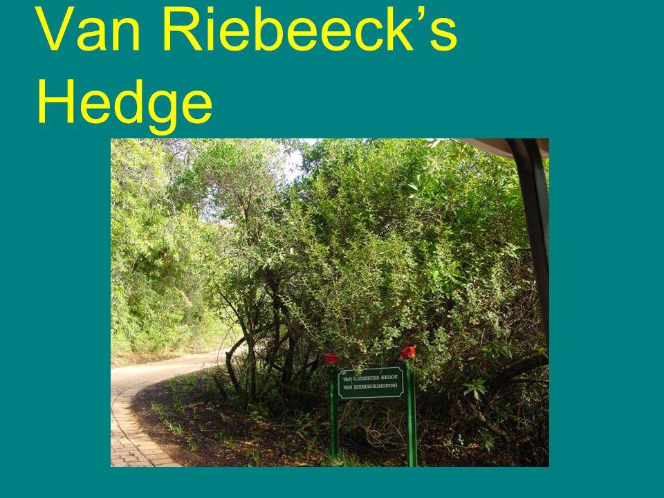 Van Riebeecks Hedge
