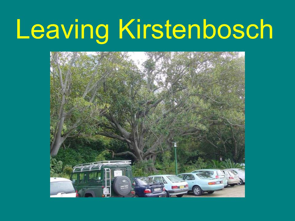 Leaving Kirstenbosch