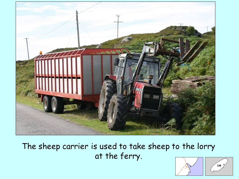 The sheep carrier is used to take sheep to the lorry at the ferry.