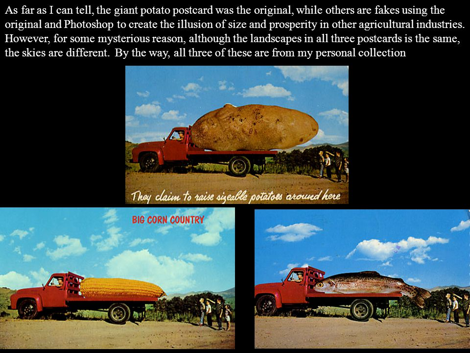 As far as I can tell, the giant potato postcard was the original, while others are fakes using the original and Photoshop to create the illusion of size and prosperity in other agricultural industries.