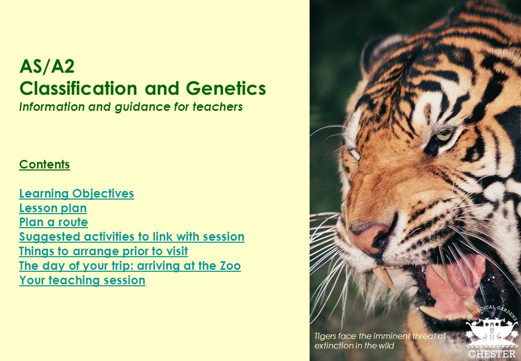 AS/A2 Classification and Genetics Information and guidance for teachers Contents Learning Objectives Lesson plan Plan a route Suggested activities to link with session Things to arrange prior to visit The day of your trip: arriving at the Zoo Your teaching session Tigers face the imminent threat of extinction in the wild