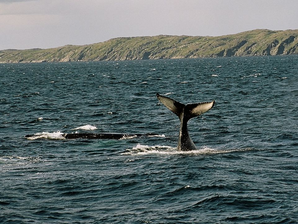 Whale Watching is Spectacular !.