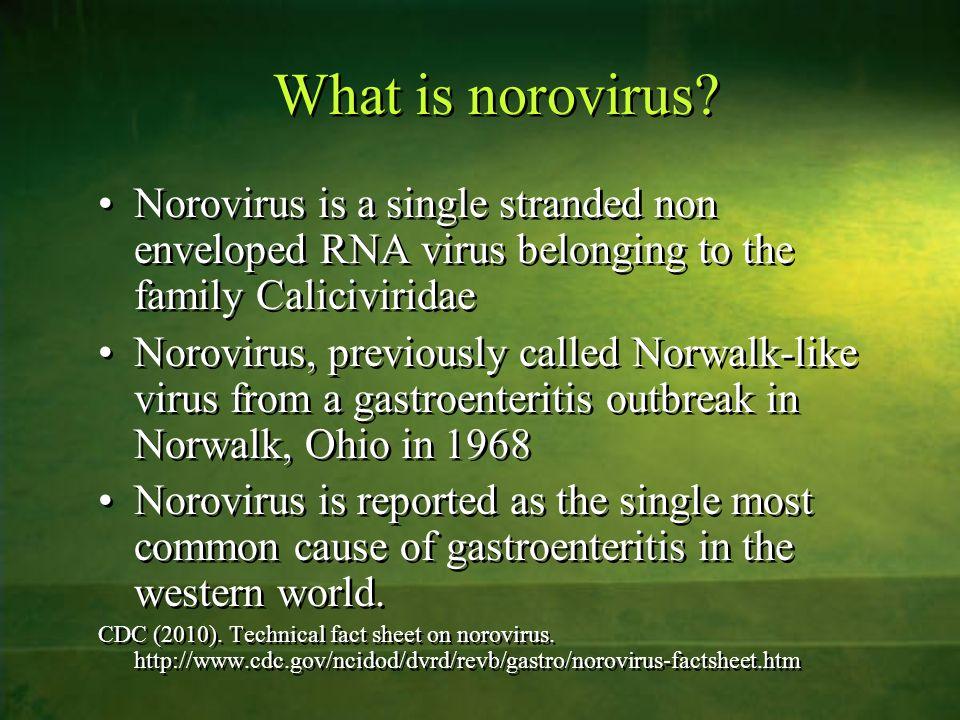 What is norovirus? Norovirus is a single stranded non enveloped RNA virus belonging to the family Caliciviridae Norovirus, previously called Norwalk-l