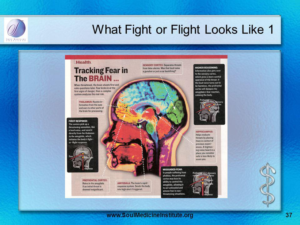 www.SoulMedicineInstitute.org37 What Fight or Flight Looks Like 1