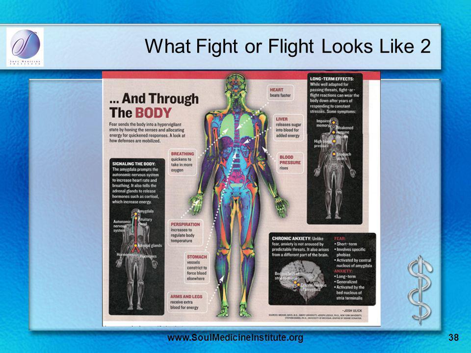 www.SoulMedicineInstitute.org38 What Fight or Flight Looks Like 2