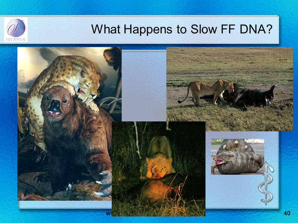 www.SoulMedicineInstitute.org40 What Happens to Slow FF DNA