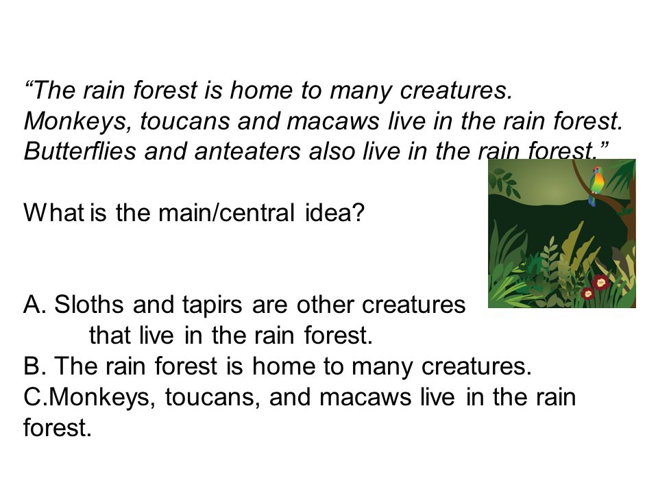 The rain forest is home to many creatures. Monkeys, toucans and macaws live in the rain forest. Butterflies and anteaters also live in the rain forest
