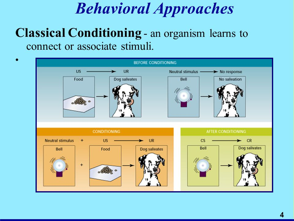 Behavioral Approaches Classical Conditioning - an organism learns to connect or associate stimuli. 4