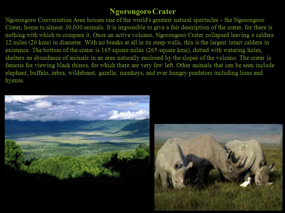 Ngorongoro Crater Ngorongoro Conversation Area houses one of the world s greatest natural spectacles - the Ngorongoro Crater, home to almost 30,000 animals.