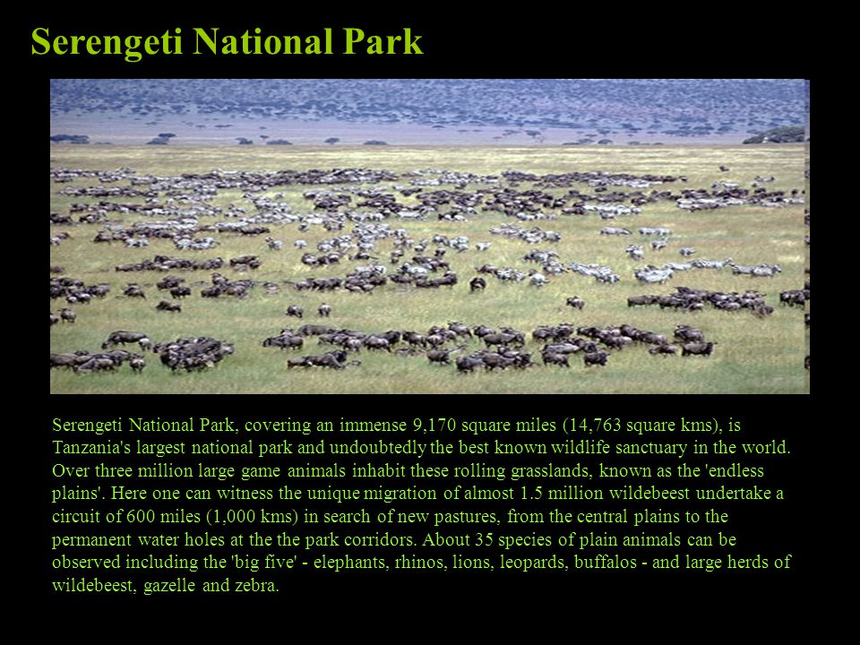 Serengeti National Park, covering an immense 9,170 square miles (14,763 square kms), is Tanzania s largest national park and undoubtedly the best known wildlife sanctuary in the world.