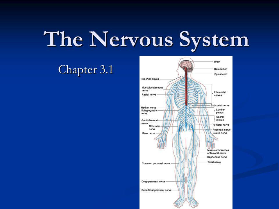 The Nervous System Chapter 3.1