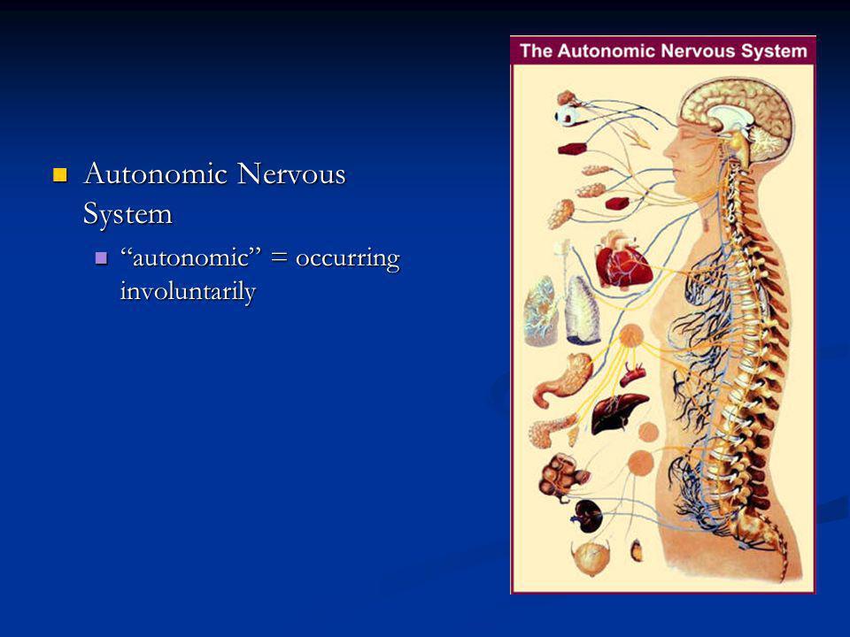 Autonomic Nervous System Autonomic Nervous System autonomic = occurring involuntarily autonomic = occurring involuntarily