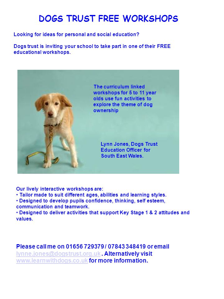 DOGS TRUST FREE WORKSHOPS Looking for ideas for personal and social education.