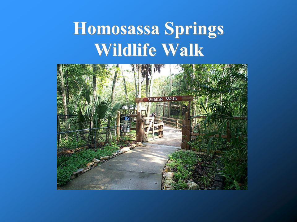 Homosassa Springs Wildlife Walk
