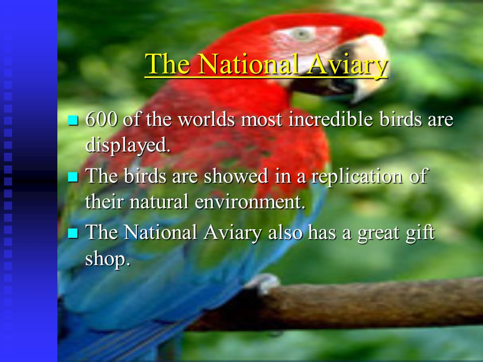The National Aviary 600 of the worlds most incredible birds are displayed. 600 of the worlds most incredible birds are displayed. The birds are showed