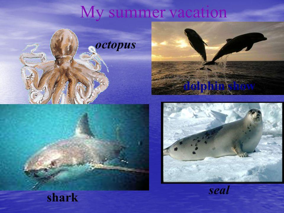 octopus shark seal dolphin show My summer vacation