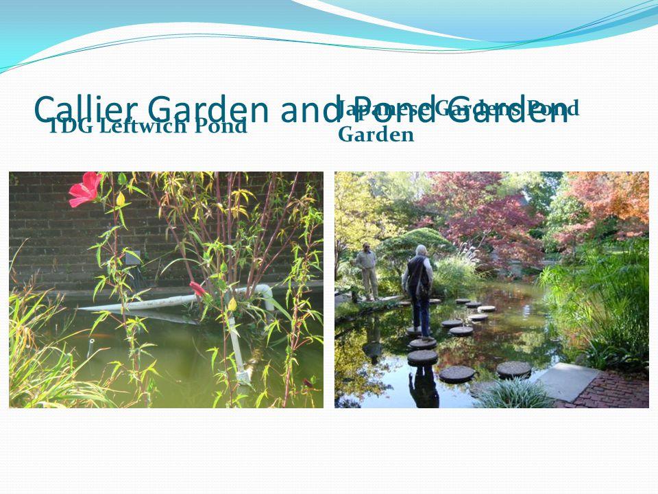 Callier Garden and Pond Garden TDG Leftwich Pond Japanese Gardens Pond Garden