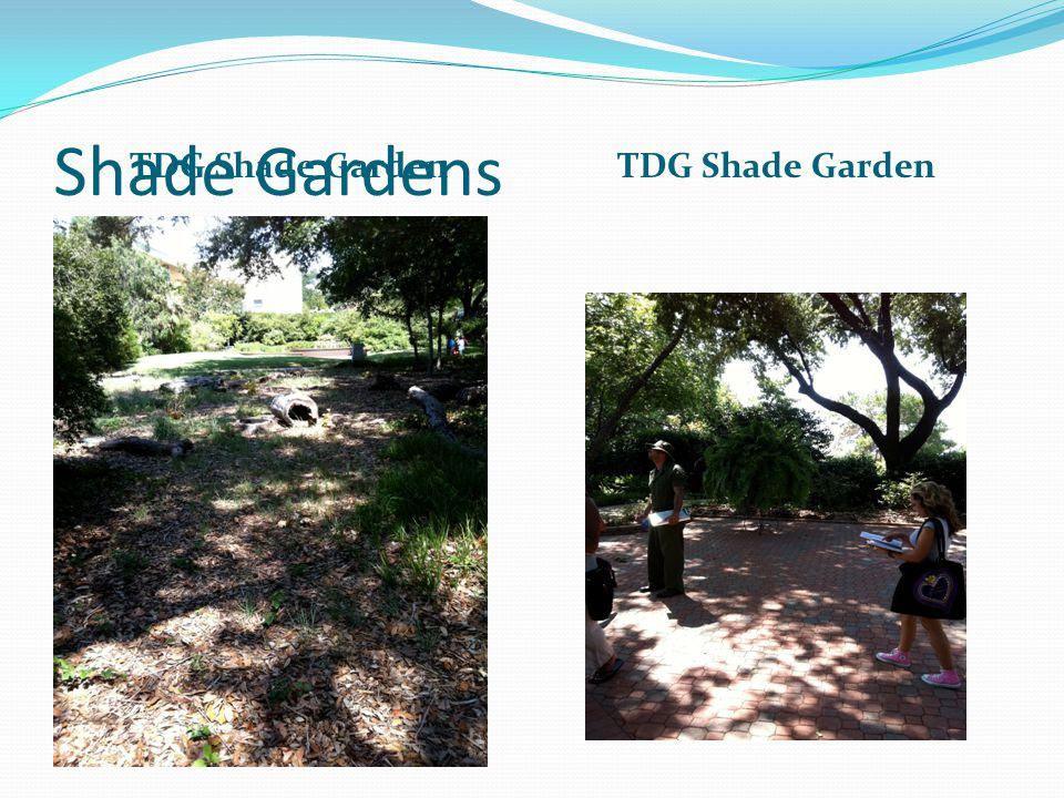 Shade Gardens TDG Shade Garden