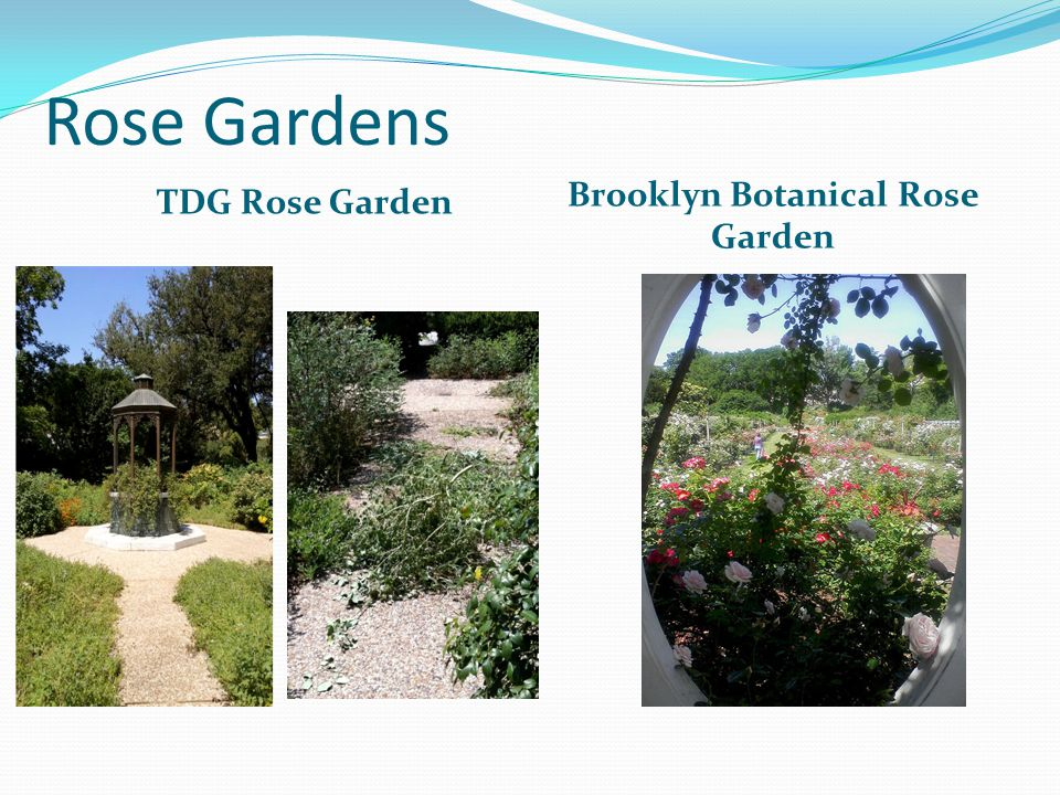 Rose Gardens TDG Rose Garden Brooklyn Botanical Rose Garden