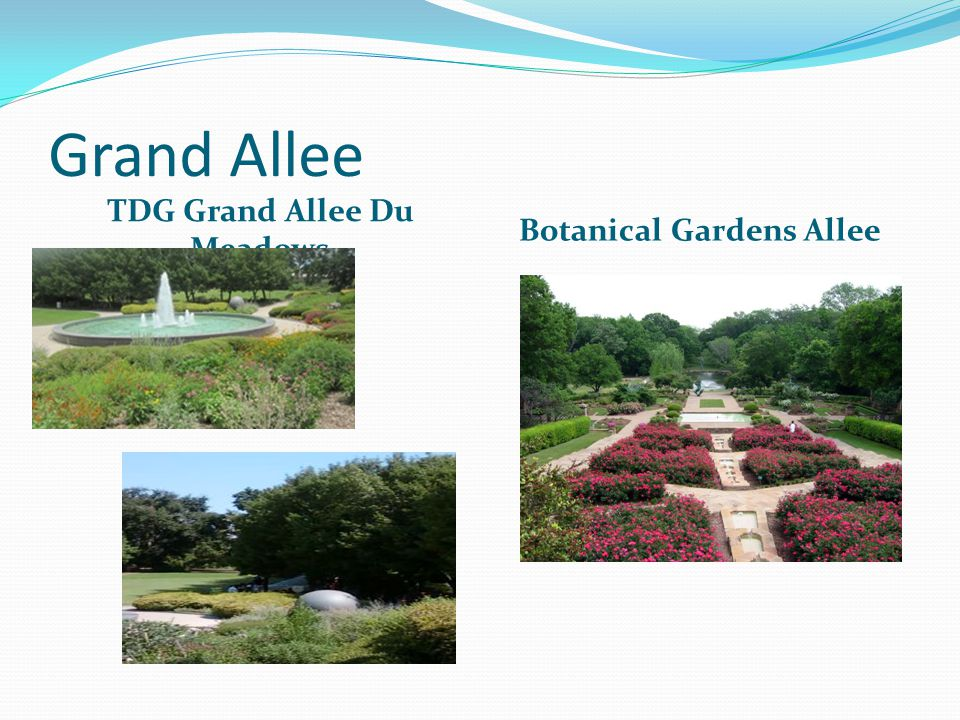 Grand Allee TDG Grand Allee Du Meadows Botanical Gardens Allee
