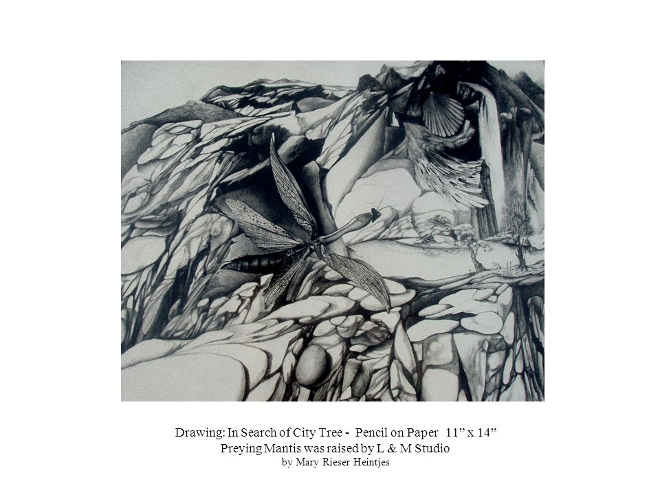Drawing: In Search of City Tree - Pencil on Paper 11 x 14 Preying Mantis was raised by L & M Studio by Mary Rieser Heintjes