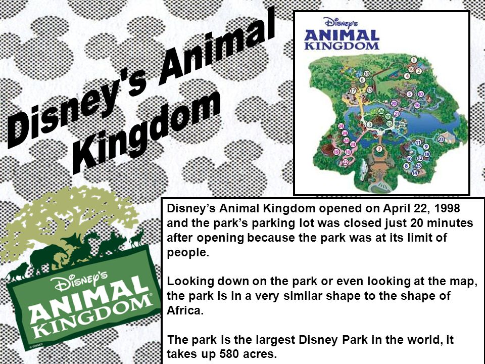 Disneys Animal Kingdom opened on April 22, 1998 and the parks parking lot was closed just 20 minutes after opening because the park was at its limit of people.
