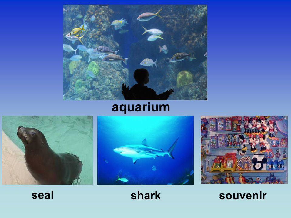 aquarium seal sharksouvenir