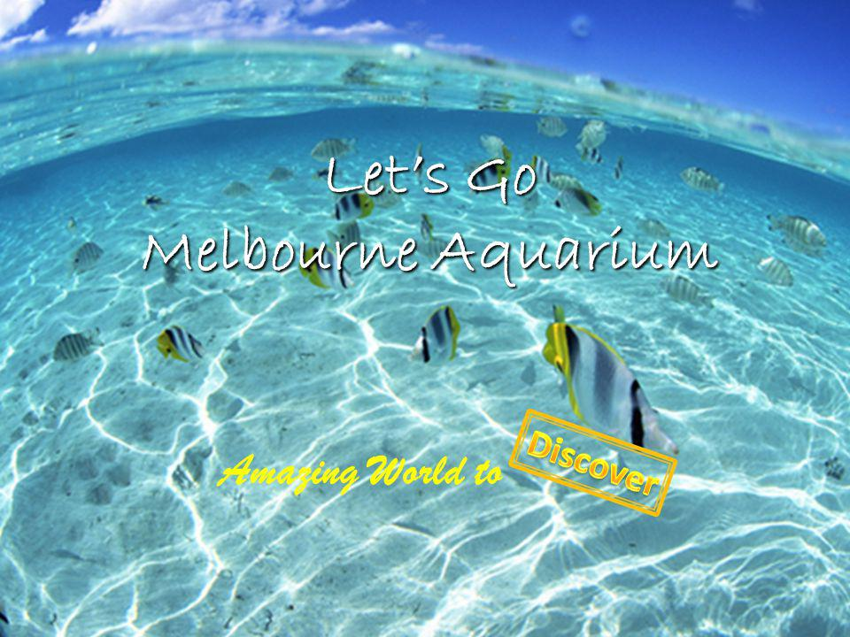 Lets Go Melbourne Aquarium Amazing World to