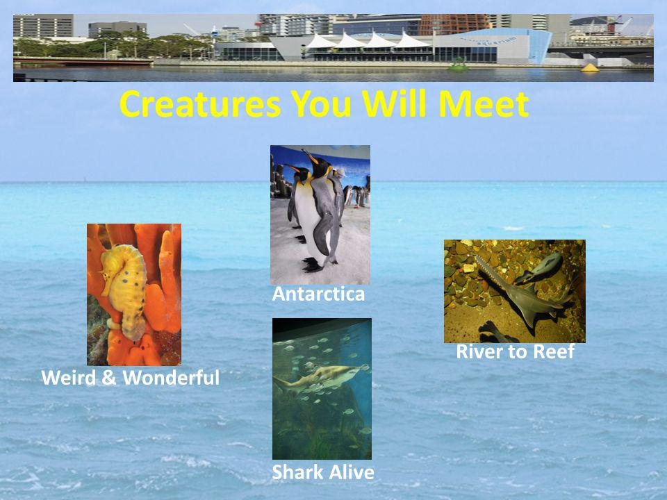 Creatures You Will Meet Antarctica Weird & Wonderful River to Reef Shark Alive