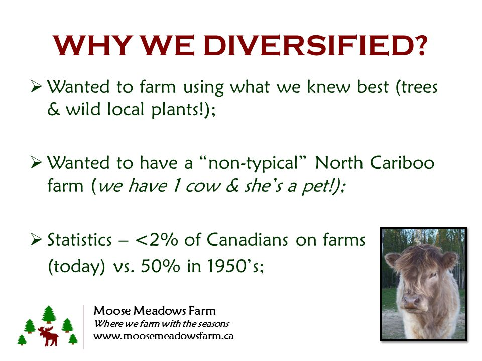 WHY WE DIVERSIFIED? Wanted to farm using what we knew best (trees & wild local plants!); Wanted to have a non-typical North Cariboo farm (we have 1 co