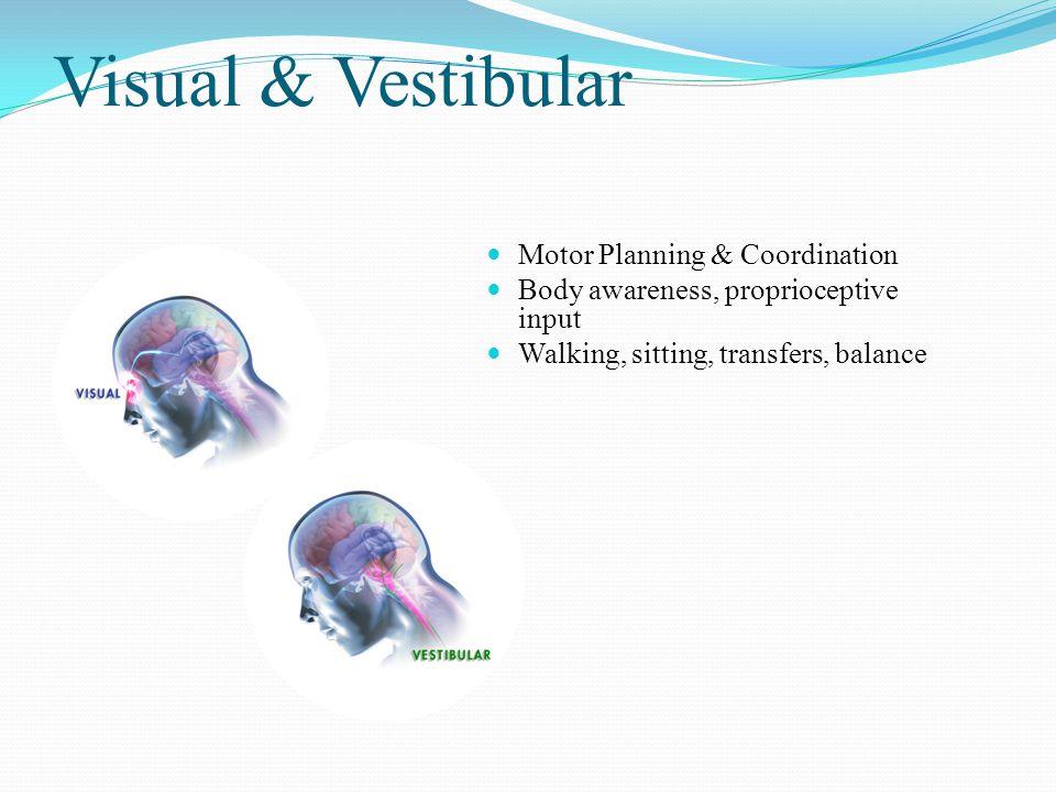 Visual & Vestibular Motor Planning & Coordination Body awareness, proprioceptive input Walking, sitting, transfers, balance